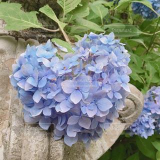 自然,花,かわいい,あじさい,散歩,お花,ハート,紫陽花,マーク