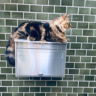 招き猫ゆずの写真・画像素材[2291773]
