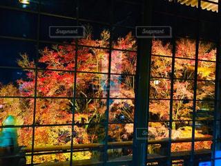 もみじのライトアップの写真・画像素材[2511098]