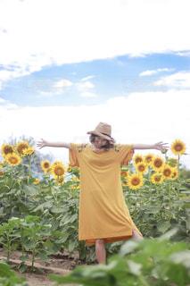 ひまわり畑の写真・画像素材[2776774]