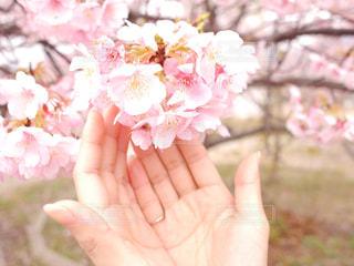 花を持つ手の写真・画像素材[2991484]