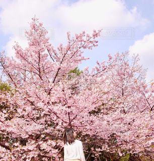 女性,友だち,1人,空,花,春,桜,木,屋外,花見,樹木,お花見,イベント,草木,ブロッサム