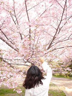 女性,花,春,桜,木,屋外,花見,樹木,お花見,人,イベント,さくら,ブロッサム