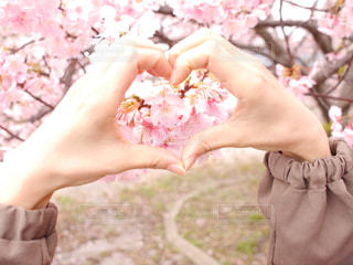 花,春,桜,木,ピンク,かわいい,手,花見,ハート,お花見,イベント,インスタ映え,ハート文字