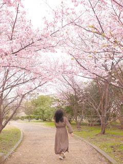 女性,1人,風景,花,春,桜,木,ピンク,花見,女の子,少女,走る,樹木,お花見,人,イベント,地面,さくら,ブロッサム,かける