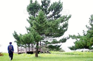 木の隣に立っている人の写真・画像素材[3140032]