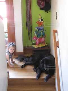 犬と子犬ガールの写真・画像素材[2049994]