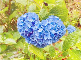 花の写真・画像素材[575484]