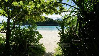 海,ビーチ,沖縄,旅行,旅,夏休み