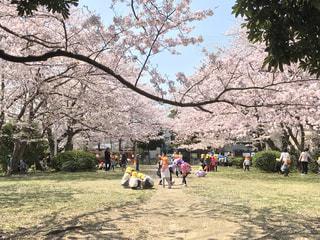 お花見,ピクニック,新入生,真砂中央公園