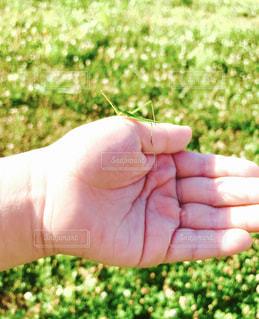 自然,公園,夏,緑,田舎,手のひら,虫取り,夏休み,男の子,8月,バッタ