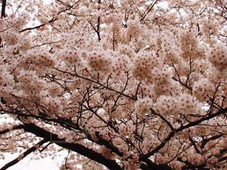 春の写真・画像素材[418474]