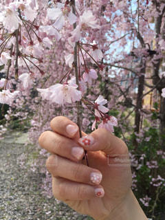 春 - No.419251