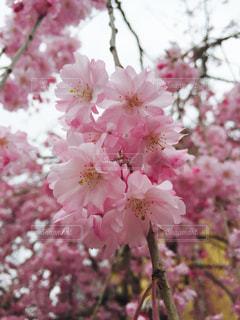 春 - No.419253