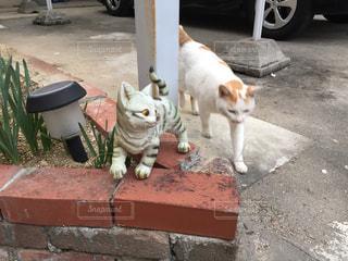 猫の置物と猫 - No.728596