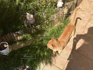 猫の置物と猫 - No.728599
