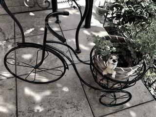植木鉢を乗せた自転車 - No.736492