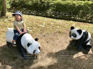 パンダに乗れた〜の写真・画像素材[1169281]