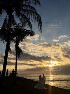 水の体の前でヤシの木とビーチの写真・画像素材[1232247]