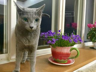 花と猫の写真・画像素材[1261558]