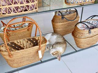 バッグと猫の写真・画像素材[1261571]