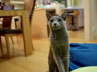 テーブルの上に座って猫の写真・画像素材[1262102]