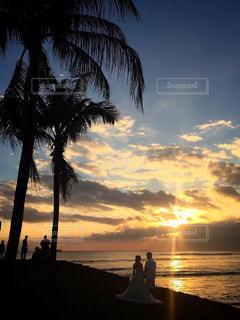 ヤシの木の前の水の体の上の夕日の写真・画像素材[2332269]
