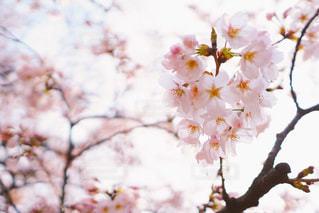 春の写真・画像素材[417902]