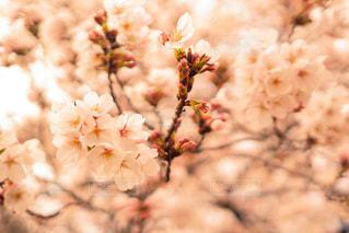花の写真・画像素材[417903]