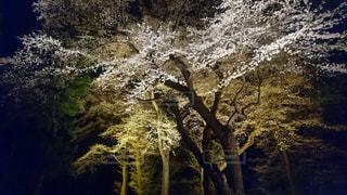 神社,夜桜,福島県