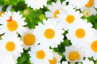 花の写真・画像素材[426856]
