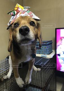 犬の写真・画像素材[469019]
