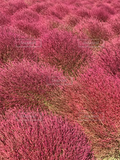 近くの花のアップの写真・画像素材[849206]
