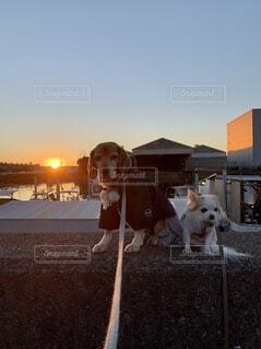 犬,動物,朝日,正月,お正月,日の出,新年,初日の出