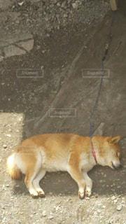 犬 - No.486857