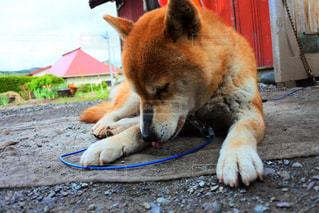 犬の写真・画像素材[487347]