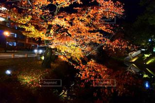 木のぼやけた写真 - No.884699