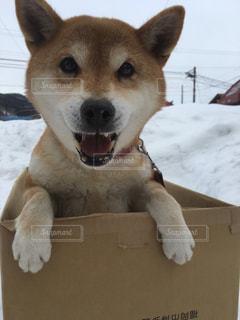 ダンボール犬 - No.1005124