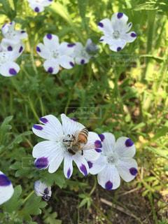 紫の花のグループの写真・画像素材[1176639]