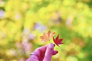 秋,紅葉,屋外,黄色,葉,もみじ,山,手持ち,人物,ポートレート,ライフスタイル,草木,手元