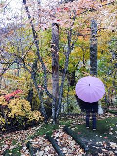 秋雨の写真・画像素材[812006]