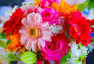 花の写真・画像素材[492655]