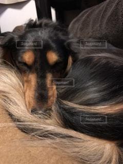 犬 - No.477975