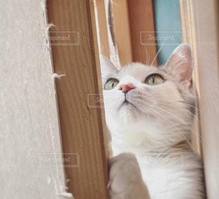 猫,動物,白,ペット,子猫,人物,ネコ,開ける