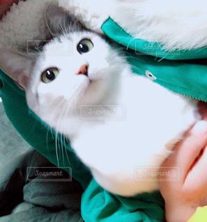 猫,動物,ペット,人物,人,ネコ