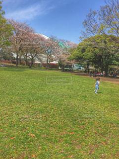 公園,春,桜,子供,女の子,幼児,引地台公園,大和市