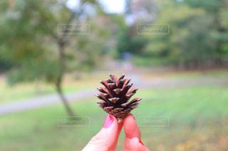 果物の木を持っている手の写真・画像素材[879227]