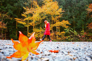 森の中の小さな女の子の写真・画像素材[913847]