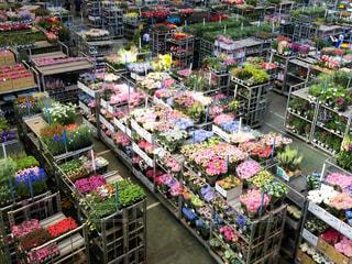 花,東京,植物,カラフル,棚,市場,花卉,ラック,プラント,大田区,大田市場,卸,東京都中央卸売市場,花き