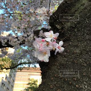 春の写真・画像素材[422465]